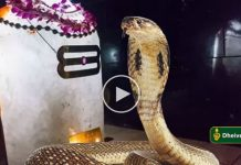 Siva lingam and snake