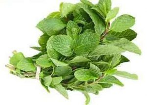 Mint leaf(puthina)
