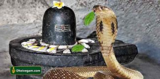 Snake with lingam