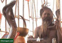 agori cobra
