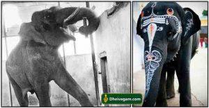 Samayapuram elephant