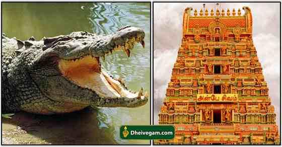 temple crocodile
