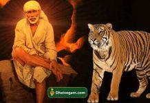 Sai baba with tiger