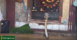 Snake in Temple