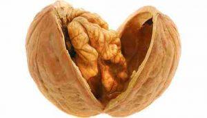 Walnut benefits in Tamil