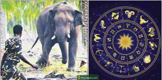 chinnathambi-elephant