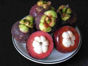 mangustan