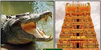 ananthapura-temple-crocodile-1