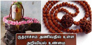 ruthraksha