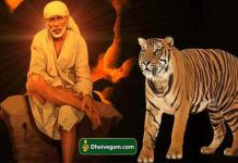sai-baba-with-tiger-1