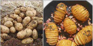 potato-urulai