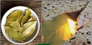 bay-leaf-burning