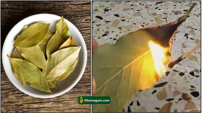 bay-leaf-burning