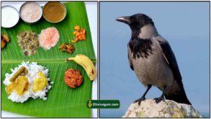 padaiyal-crow