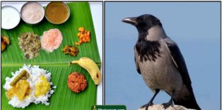 padaiyal-crow