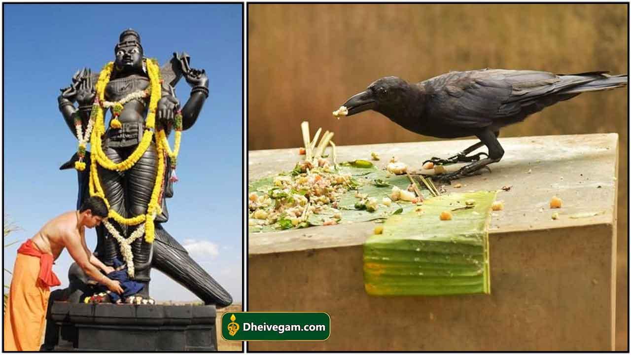 sani-crow