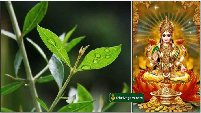 henna-mahalakshmi