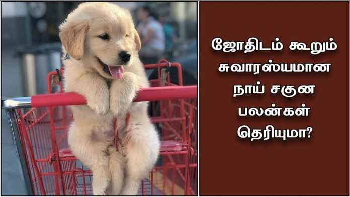 dog-sagunam