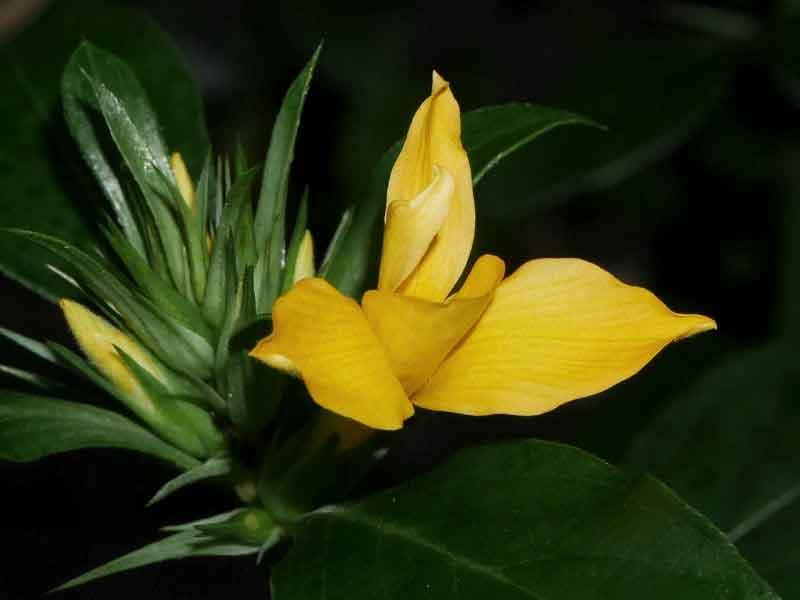 narayana-sulli1
