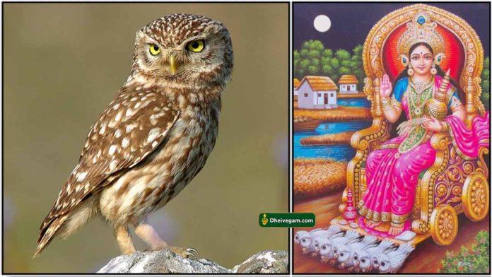 owl-lakshmi1