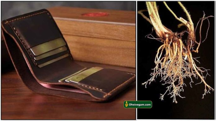 purse-root