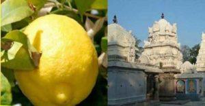 temple-lemon1