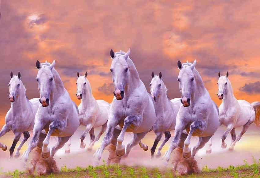 7-horse1