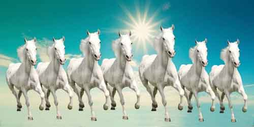 7-horse2