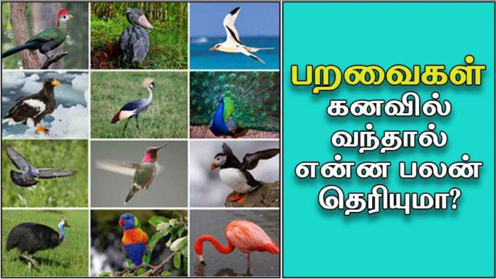 birds-kanavu