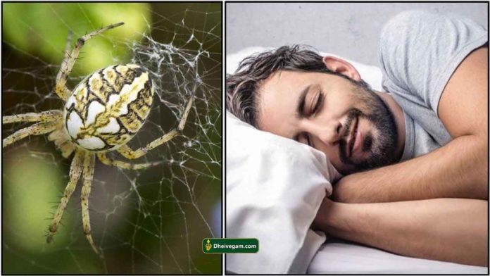 insect-kanavu-palan