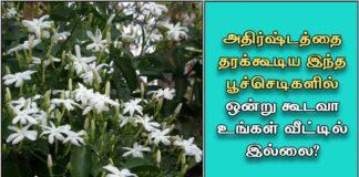 lucky-flower-plant