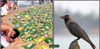 pithru-tharpanam-crow-padaiyal