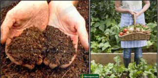 plant-gardening