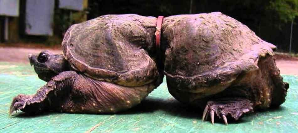 tortoise3
