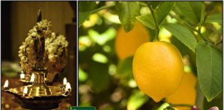 vilaku-lemon