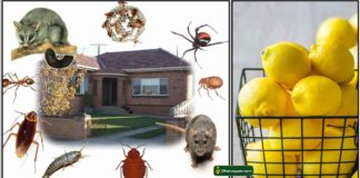 home-insects