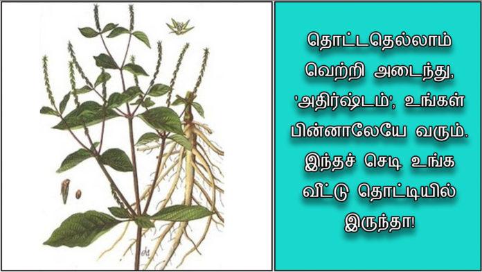 nayuruvu-(1)