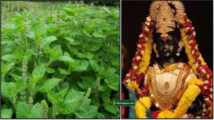 thulasi-amman
