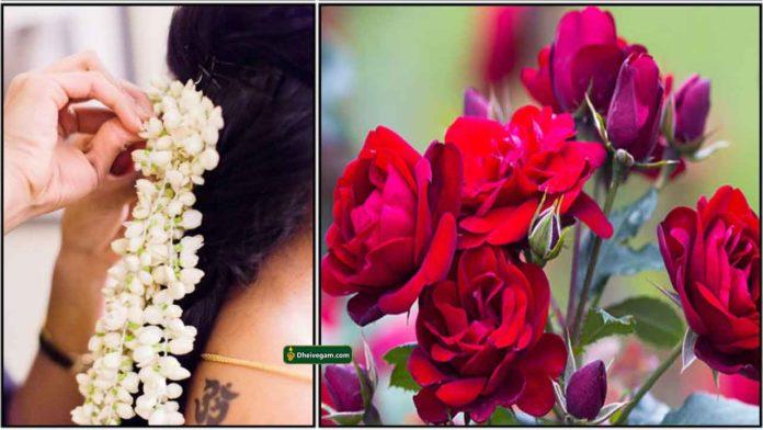 flower-poo-rose