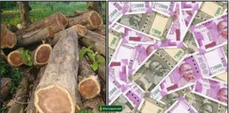 teak-wood-cash