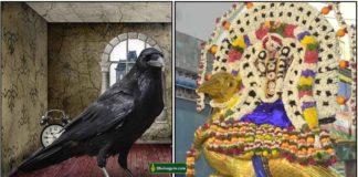 crow-sani