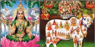 lakshmi-gomatha