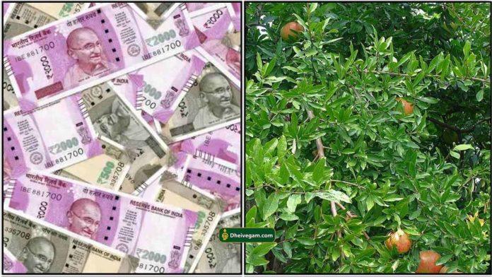 money-madhulai