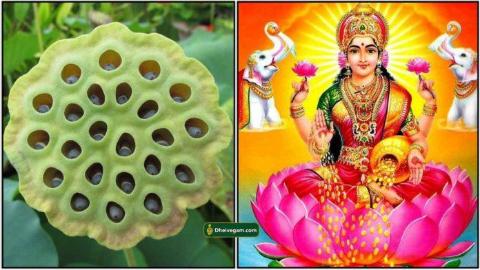 thamarai-vithai-lakshmi