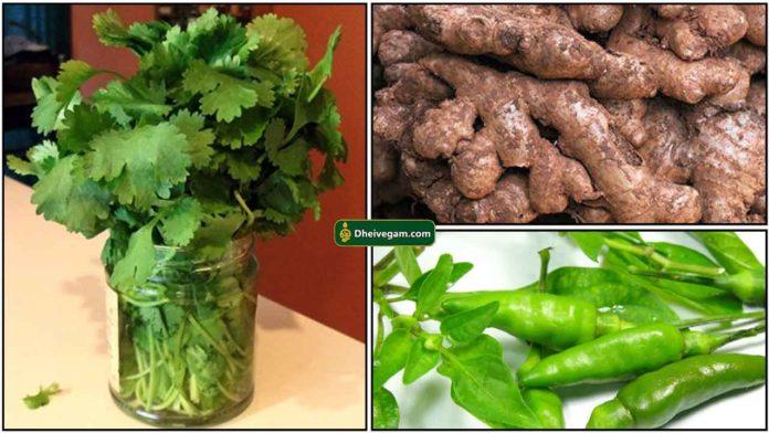 coriander-chilli-ginger
