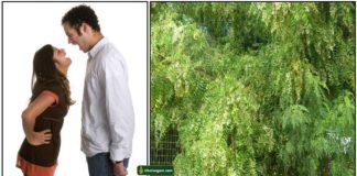 couple-veppilai-tree