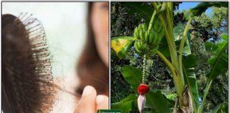 hair-fall-banana-tree