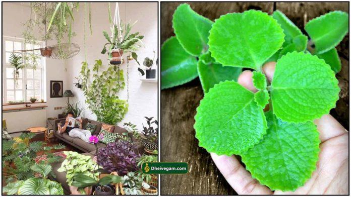 indoor-plants1