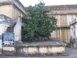 thalavirutcham