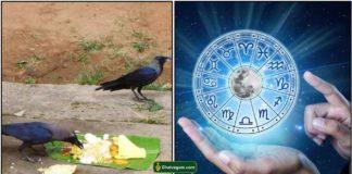 crow-astro
